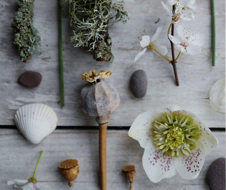 Creative Chats ~ Alice- The Wildwood Moth