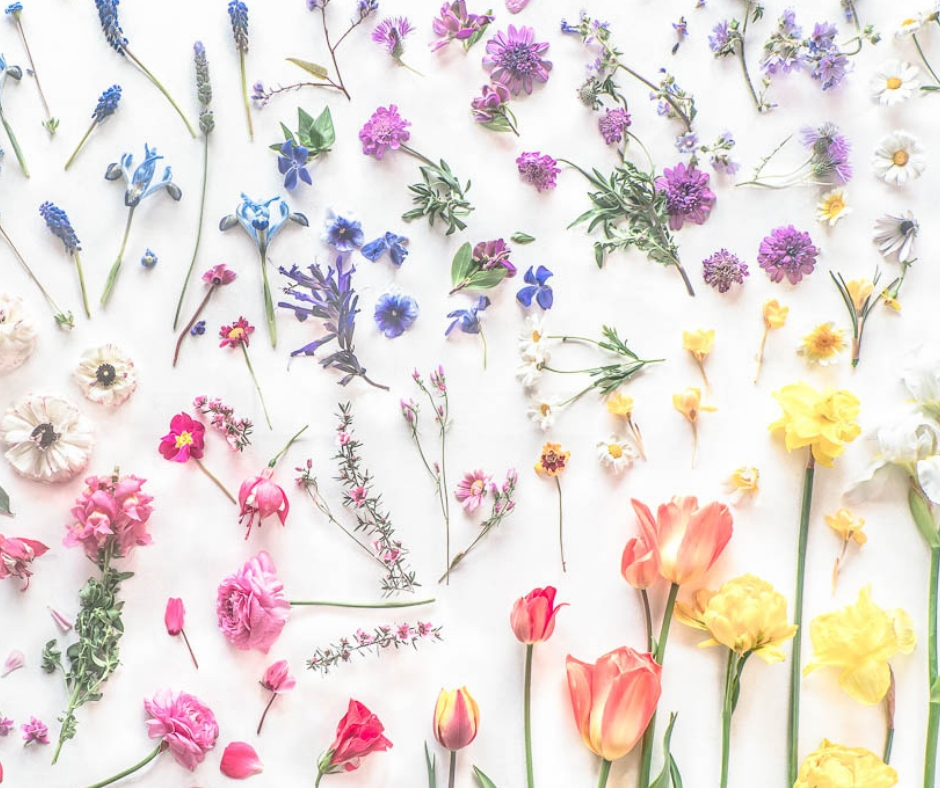 Creative Chat by Curly Carrot with Kriss MacDonald - Botanical Art Photography